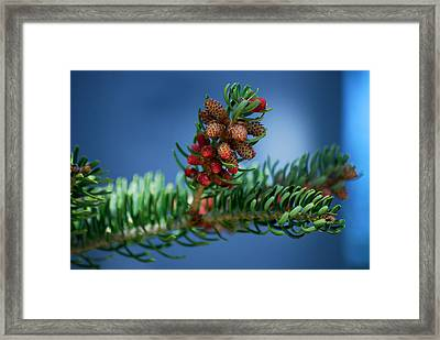 #wetootellstories Framed Print by Becky Furgason