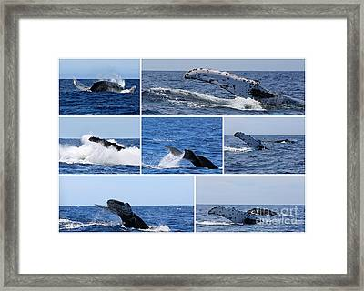 Whale Action Framed Print