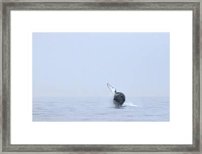 Whale Framed Print