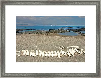 Whale Bones Framed Print by Alan Lenk