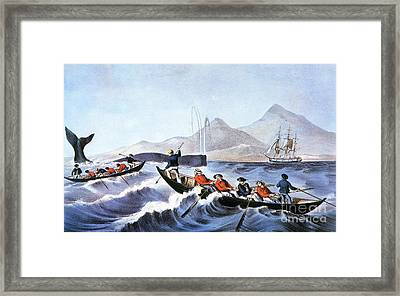 Whale Fishery, Laying On Framed Print by Granger