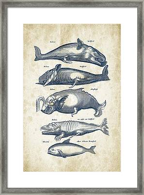 Whale Historiae Naturalis 08 - 1657 - 41 Framed Print by Aged Pixel