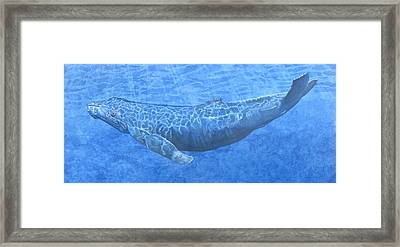 Whale In Surface Light Framed Print by Dominic White