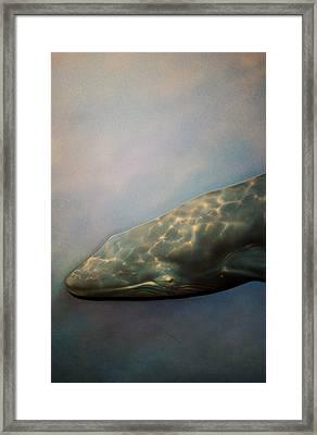Whale Meet Again Framed Print by Jez C Self