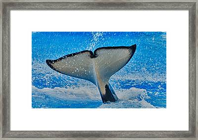 Whale Of A Tail Framed Print by Linda Pulvermacher