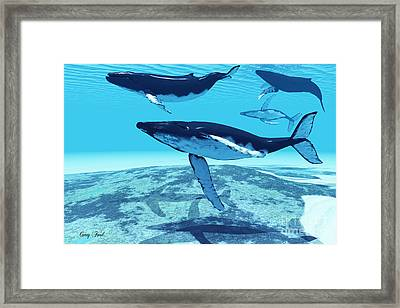 Whale Pod Framed Print by Corey Ford