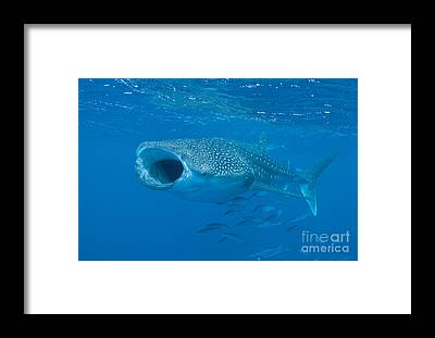 Ichthyology Framed Prints