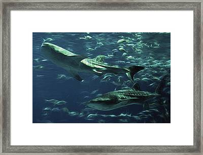 Whale Shark Couple Framed Print