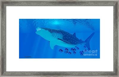 Whale Shark Feeding Framed Print