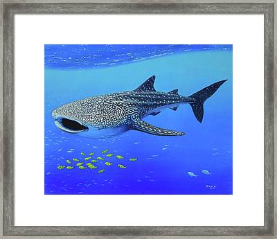 Whale Shark Framed Print by James Zeger