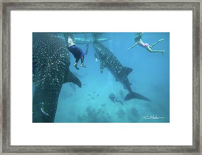 Whale Sharks Framed Print