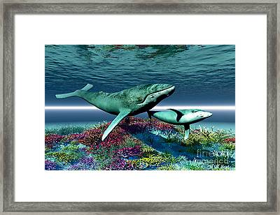 Whale Song Framed Print by Corey Ford
