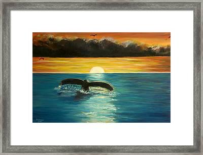 Whale Tail At Sunset  Framed Print by Bernadette Krupa