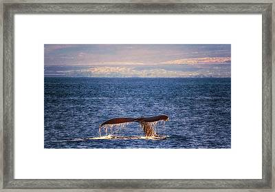 Framed Print featuring the photograph Whale Tail by Susan Rissi Tregoning
