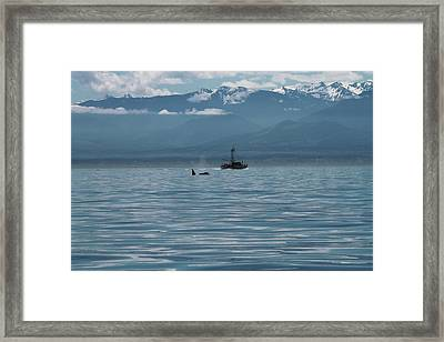 Whale Watching In The Strait Of Juan De Fuca Framed Print by Dan Sproul