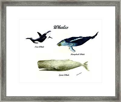 Whales Framed Print by Michael Vigliotti
