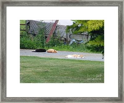 What A Day Framed Print by Donald C Morgan
