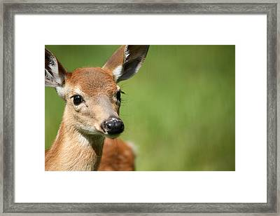 What A Face 1 Framed Print by Karol Livote