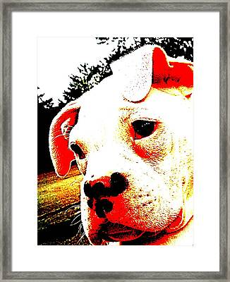 What A Face Framed Print by Beth Akerman
