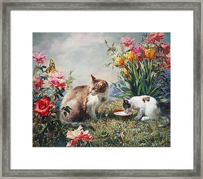 What A Girl Kitten Wants Framed Print by Svitozar Nenyuk