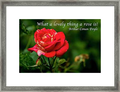 What A Lovely Thing A Rose Is Framed Print