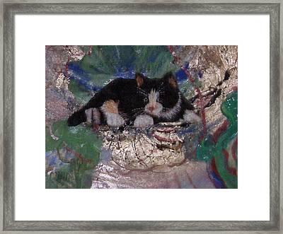 What A Pretty Kitty Framed Print by Anne-Elizabeth Whiteway