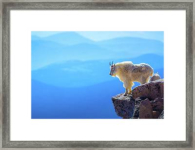 What A View Framed Print by John De Bord