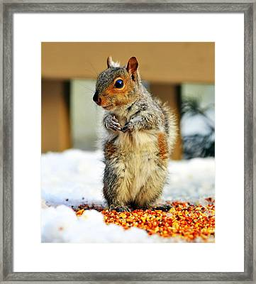 What About Some Acorns Framed Print by Aron Chervin