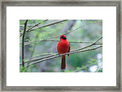 What Are You Doing? Framed Print by Julie Cameron