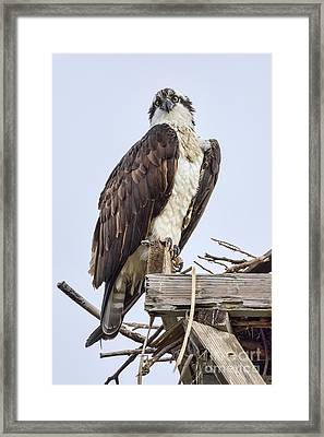 What Are You Looking At Framed Print by Eddie Yerkish