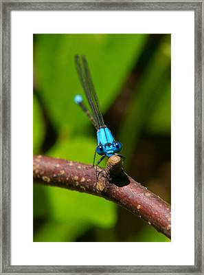 What Are You Looking At Framed Print by Frank Pietlock