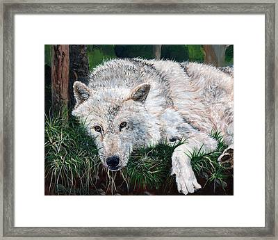 What Are You Looking At Framed Print by Timithy L Gordon