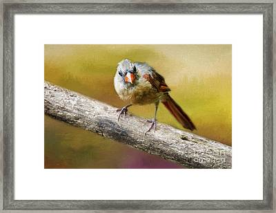 What Framed Print by Darren Fisher