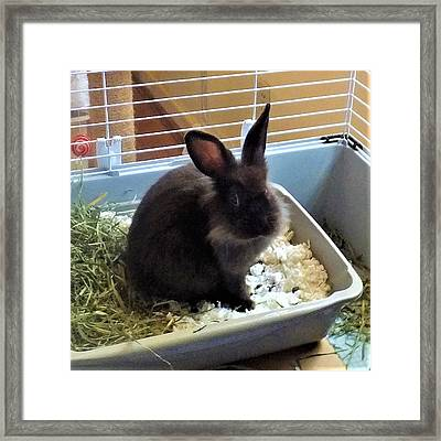 Framed Print featuring the photograph What? by Denise Fulmer
