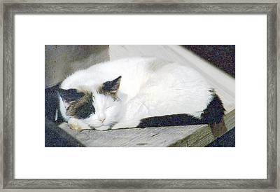 What Do Cats Dream Of #2 Framed Print