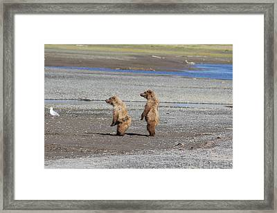 What Do I See Framed Print by David Wilkinson
