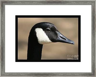 Canadian Goose Framed Print