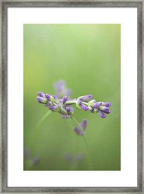 What Friends Are For Framed Print
