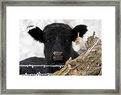 What Frost Framed Print by Fred Lassmann