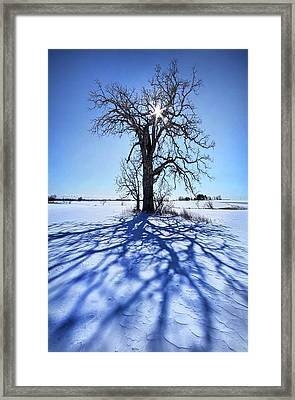 Framed Print featuring the photograph What I Am, What I Was, What I Will Be by Phil Koch