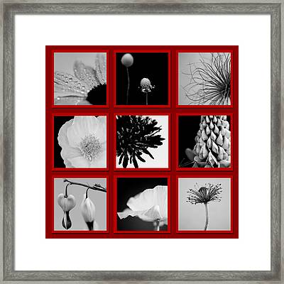 What Is Black And White And Red All Over  Framed Print by Lisa Knechtel