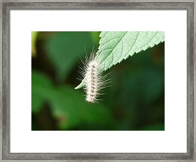 What Is Down There Framed Print by Morning Dew