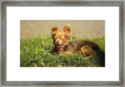 What Is So Funny Framed Print