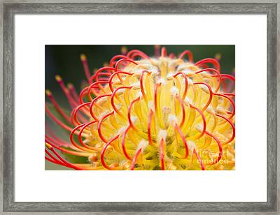 What Is Your Genius Framed Print by Sharon Mau