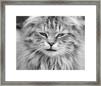 What Mouse Framed Print