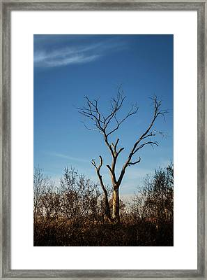What Once Was Framed Print by Mary Lee Dereske