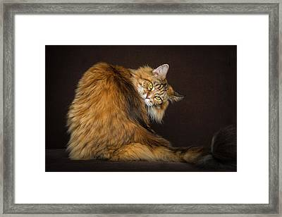 What? Framed Print