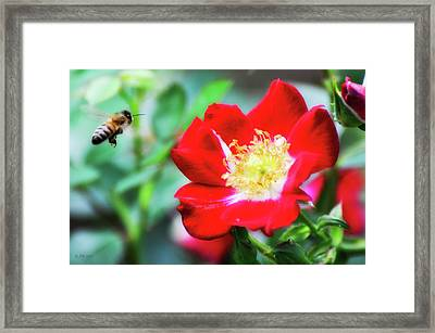 What The Buzz Is All About Framed Print