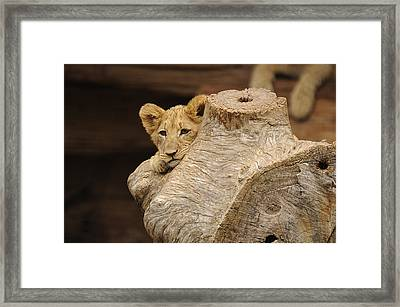 What To Do Framed Print by Keith Lovejoy