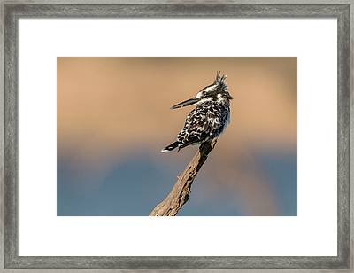 What Was That You Said Framed Print